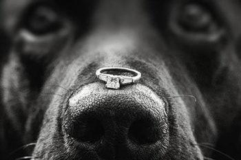 fearless wedding photographer dallas texas