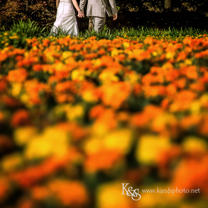 wedding at dallas arboretum